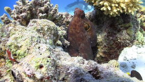 章鱼窃取摄象机 影视素材