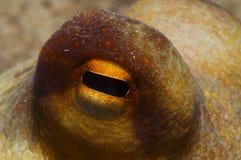 章鱼被伪装 免版税图库摄影
