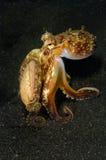 章鱼走 免版税库存图片