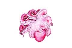 章鱼,湿和新鲜 免版税图库摄影