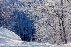 童话冬天森林,在霜的树 免版税图库摄影