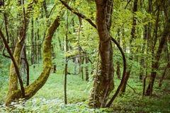 童话在森林 免版税库存照片