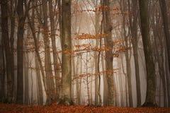 童话有雾的森林 免版税图库摄影