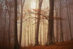 童话有雾的森林 库存图片