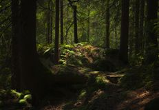 童话森林,是? 免版税图库摄影