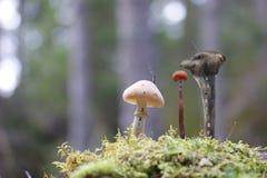 童话真菌城市 免版税库存照片