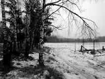 童话自然在一个黑白图象的一个冬天森林里 库存图片