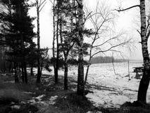 童话自然在一个黑白图象的一个冬天森林里 免版税图库摄影