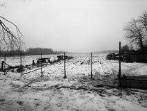 童话自然在一个黑白图象的一个冬天森林里 免版税库存照片