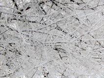 童话自然在一个黑白图象的一个冬天森林里 免版税库存图片
