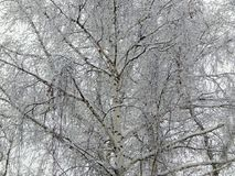 童话自然在一个黑白图象的一个冬天森林里 库存照片