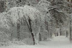 童话道路在冬天积雪的森林里 免版税库存照片