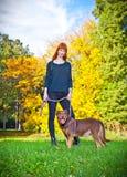 端庄的妇女获得与她的大狗的乐趣在公园 免版税库存图片