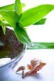 竹下落叶子壳水 图库摄影