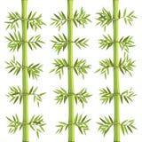 竹亚洲植物和自然 免版税库存图片