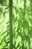 竹公园,特写镜头 图库摄影