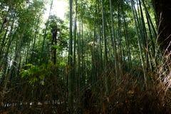 竹凹线 图库摄影