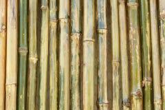 竹发光的墙壁 库存图片