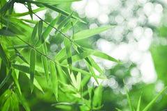 竹叶子和抽象绿色背景bokeh blured背景,选择聚焦 免版税库存照片