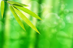 竹叶子和抽象绿色树背景bokeh 免版税库存图片