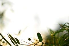 竹叶子和被弄脏的光早晨 免版税库存图片