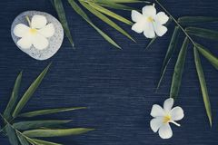 竹叶子和赤素馨花在黑暗的背景开花 电影被定调子的照片 库存照片