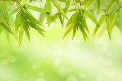 竹叶子和轻的软的绿色背景 库存图片