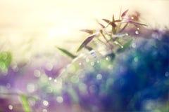 从竹叶子,抽象和软的颜色样式的自然bokeh 库存图片