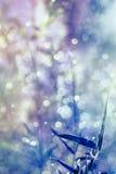 从竹叶子,抽象和软的颜色样式的自然bokeh 免版税库存图片