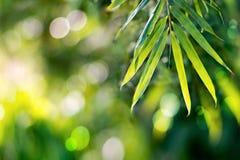 竹叶子,自然背景 免版税库存照片