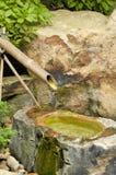 竹喷泉 库存图片