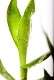 竹子丢弃叶子幸运的水图片