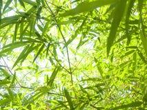 竹子叶子。 免版税库存图片