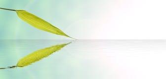 竹子叶子和水反射 免版税库存图片