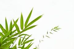 竹子叶子 免版税库存照片
