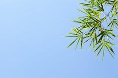 竹子叶子 免版税库存图片