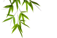 竹子叶子 库存图片