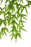 竹子叶子 图库摄影
