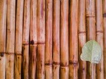 竹子和叶子 免版税图库摄影