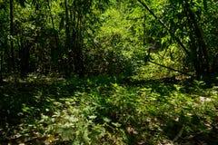 竹子和杂草茂盛在晴朗的夏天 库存图片