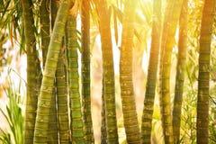 竹子在庭院里 免版税图库摄影
