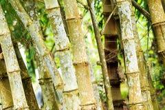 竹子在庭院里 库存照片