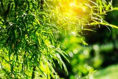 竹子在庭院里 库存图片