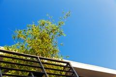 竹子在蓝色清楚的天空下 免版税库存图片