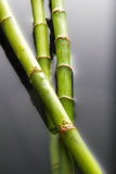 竹子在水中浸洗了 库存图片