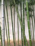 竹子庭院 库存照片