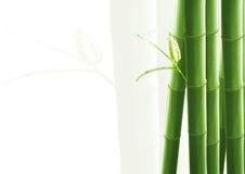 竹子查出的白色 库存照片
