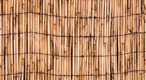 竹子橙色墙壁纹理  免版税库存照片