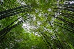 竹子汇合  库存照片