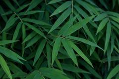 竹子留下背景的绿色特写镜头 库存照片